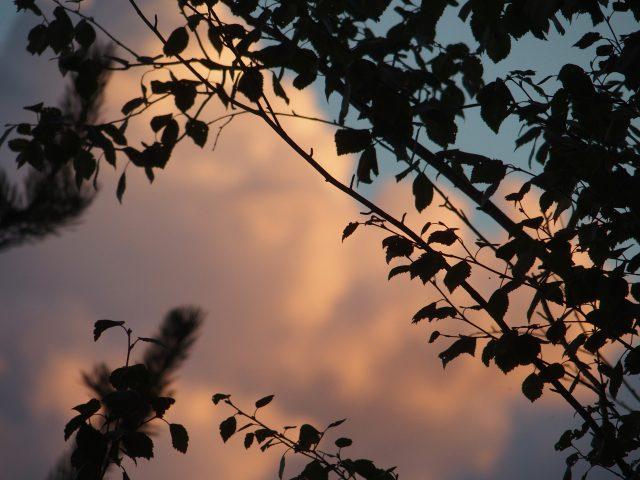 värikästaivas tummien oksien läpi katsottuna