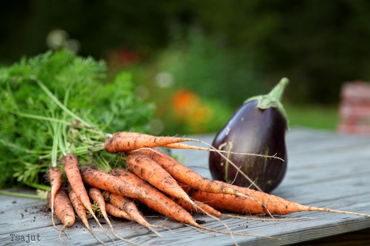 porkkanoita ja munakoiso