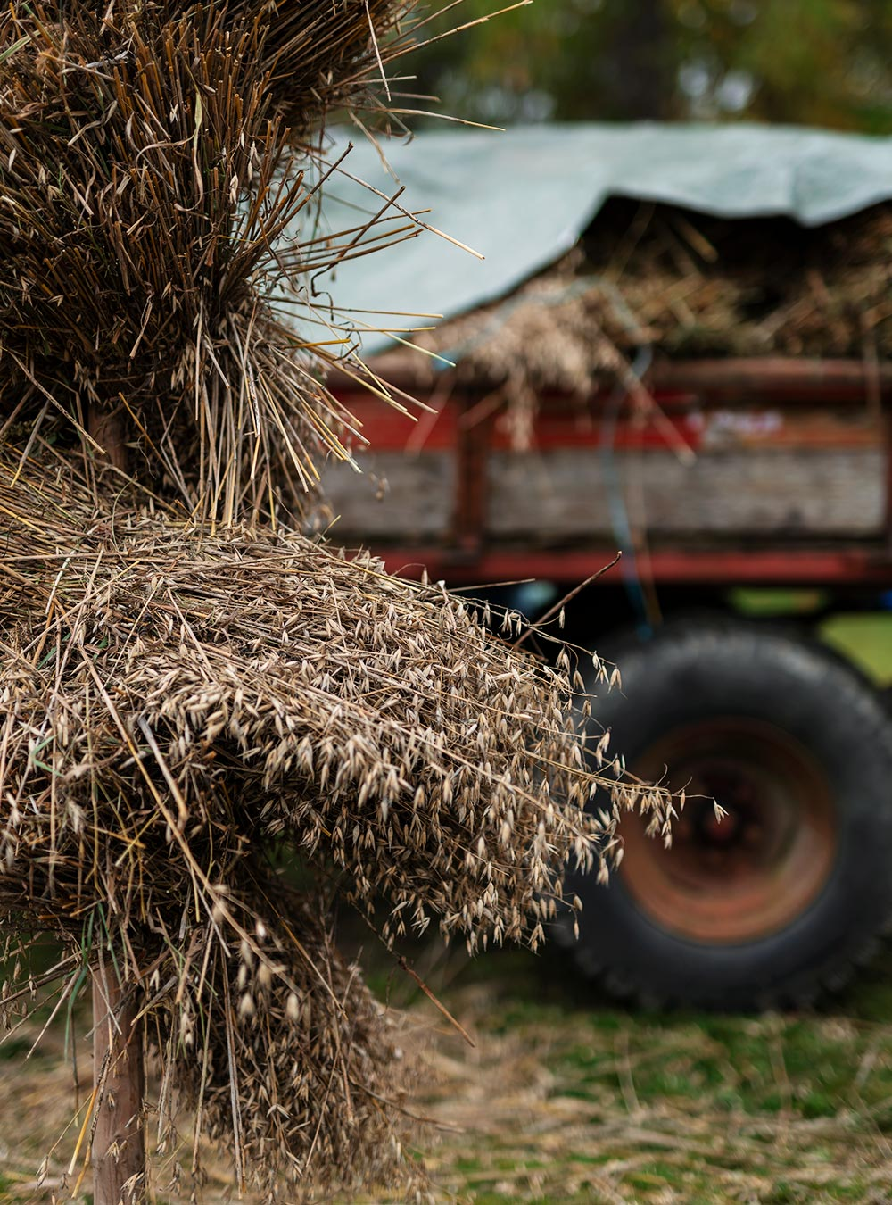 viljaa ja traktorin peräkärry