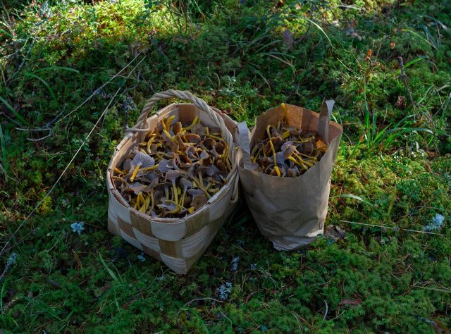 pärekorissa ja paperikassissa sieniä